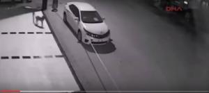 بالفيديو: كلاب ضالة تهاجم سيارة وتحطمها خلال دقائق