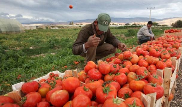"""إيقاف الصادرات الزراعية الى سوريا بسبب تراجع قيمة """"الليرة"""""""