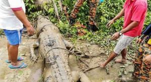 العثور على جثة طفل مفقود في معدة تمساح