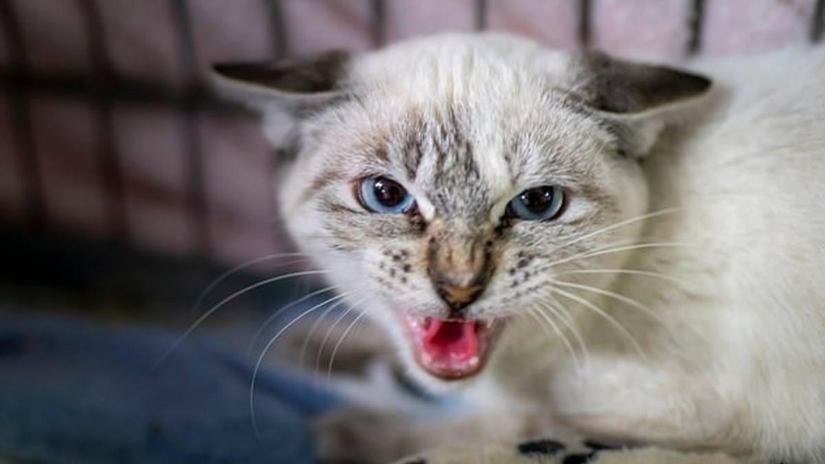 خدش بأظافر قطة يتسبب بوفاة سيدة مسنة