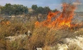 اخماد حريق أعشاب وأشجار في الزرقاء