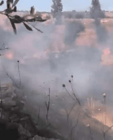 حريق كبير يأتي على اشجار مثمرة في اربد