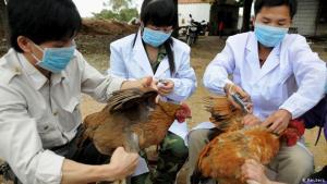 الصحة العالمية تحسم الجدل حول تفشي إنفلونزا الطيور بين البشر