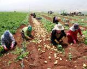 12 مليون دينار للمشاريع الزراعية في المحافظات