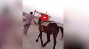 بالفيديو: ماذا فعل هذا الحصان عندما حاول رجل بدين ركوبه ؟