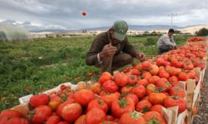 إعفاء القطاع الزراعي من ضريبة الدخل: الوهم الوطني المستمر