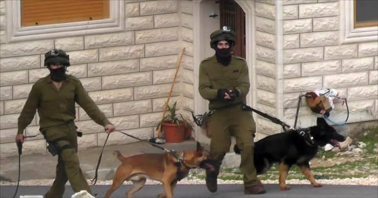 كلاب الاحتلال البوليسية تعتدي على مسنة بالخليل