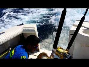 بالفيديو.. أسد البحر يستعرض مواهبه الرياضية ويفوز بسمكة
