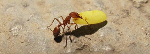 قصة سيدنا سليمان والنملة على شاطئ البحر