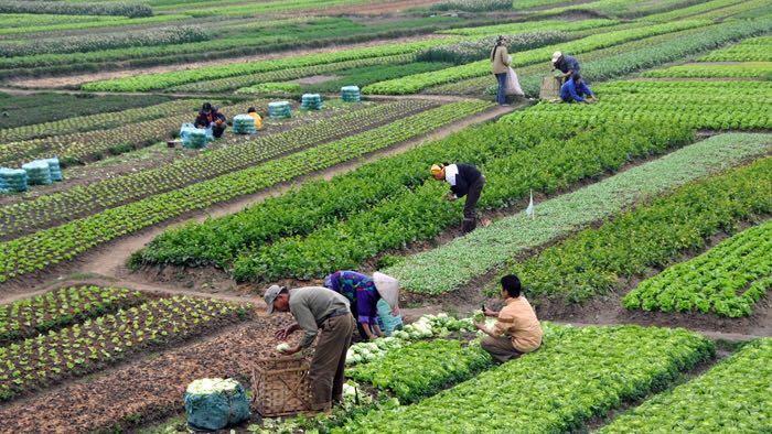 تغيير الانماط الزراعية في الاردن