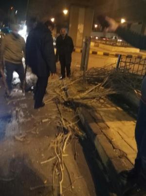 بالصور   .. الرياح القوية تقتلع اشجاراً في عمان