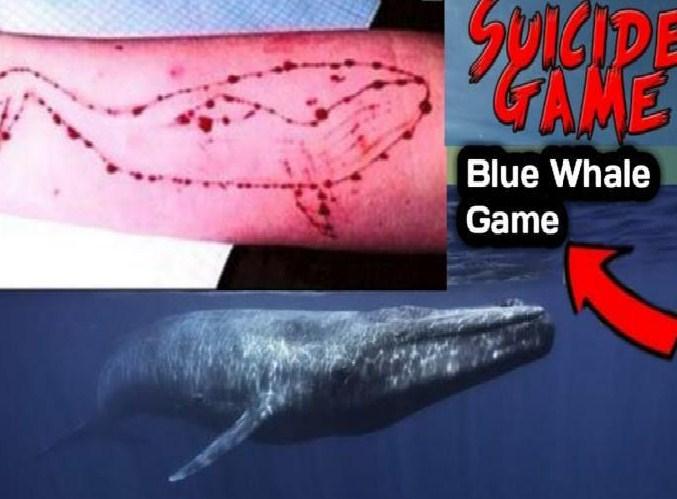"""الطبيب النفسي """"مزهر"""" يوضح لسرايا كيف تجبر لعبة الحوت الازرق المراهقين على الإنتحار  ..  تفاصيل"""