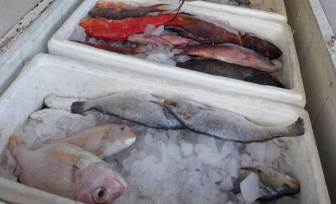 ارتفاع أسعار الأسماك المستوردة 10 %