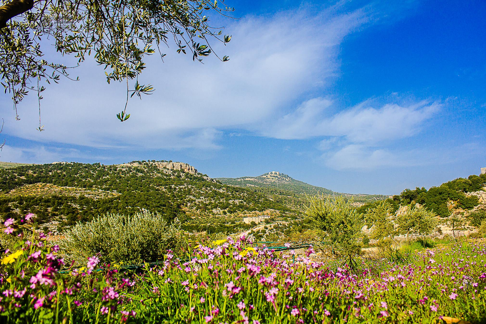 الخميس  ..  طقس ربيعي ودافئ في اغلب مناطق المملكة