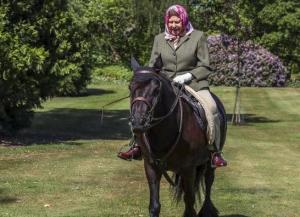 """على ظهر حصان ..  أول ظهور لملكة بريطانيا إليزابيث الثانية منذ """"إغلاق كورونا"""""""