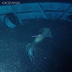 """بالفيديو  ..  العثور على مخلوق غامض """"أكبر من الإنسان"""" في البحر الأحمر"""