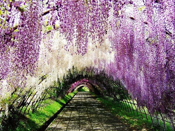 تعرفوا على حديقة اشاكيكا في اليابان وأبرز معالم السياحة في اليابان