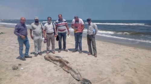 بالصور .. حيوان غريب على شواطئ مصر يثير الرعب بسبب ضخامته