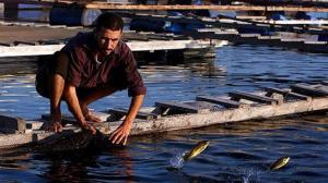ثلاثة أرباع أسماك النيل ملوثة بالبلاستيك