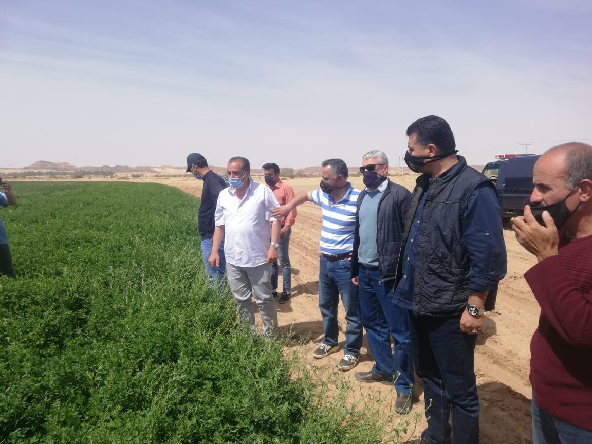 وزارة الزراعة: استمرار مكافحة الجراد الصحراوي في المدورة