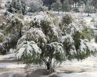 الأمطار تعم المملكة والثلوج في الجنوب