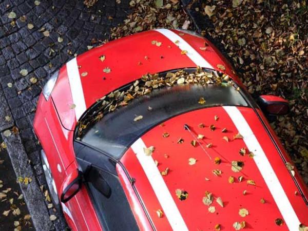 خبراء يحذرون من أوراق الأشجار المتساقطة على السيارة ..  لهذه الأسباب