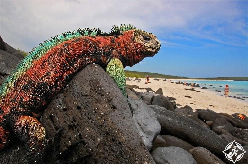 تعرف على أفضل أوقات السفر إلى أمريكا الجنوبية .. صور