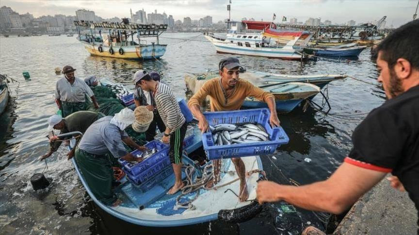 تراجع تصدير الأسماك يسبب خسائر مالية لقطاع غزة