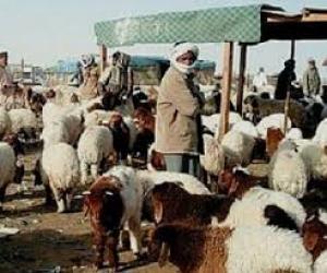 بلدية الشوبك : تخصيص قطعة ارض ذات مساحة واسعة لتكون سوقاً للحلال