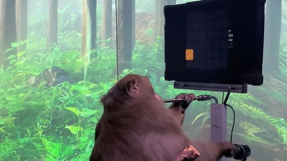 فيديو لا يصدق ..  قرد يلعب ببراعة بعد زراعة شريحة في دماغه