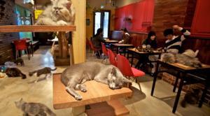 مقهى للقطط فقط في برلين