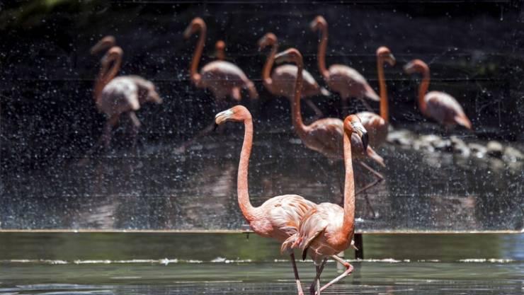 بالصور ..  اعتداء في سماء لبنان على أجمل الطيور في العالم