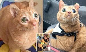 بالفيديو: قطة عجيبة تدعى بطاطا تجذب آلاف المتابعين في امريكا