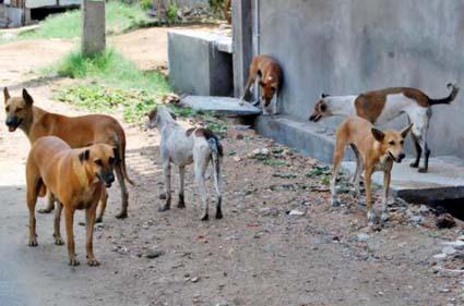 الطفيلة : شكاوي من انتشار الكلاب الضالة بين الاحياء السكنية