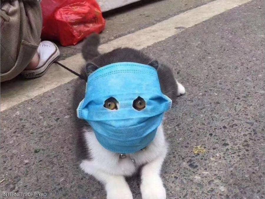 """""""القطط المقنّعة"""" تظهر في الصين ..  فهل هي في مأمن؟"""