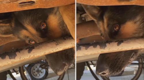 بالفيديو :ساعتان لإنقاذ كلب علق أسفل شاحنة