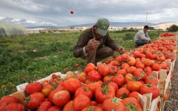 السماح للمزارعين بالبيع مباشرة للمواطنين