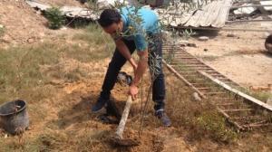 """مبادرة """"شجرة شهيد """"لتخليد شهداء العدوان الاسرائيلي على غزة"""