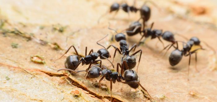 ماذا يعني رؤية النمل في المنام