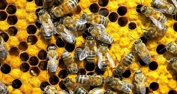 الشرطة الأمريكية تلقي القبض على صبيين بتهمة قتل نصف مليون نحلة