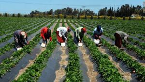 تخفيض الضريبة على مدخلات الإنتاج الزراعي