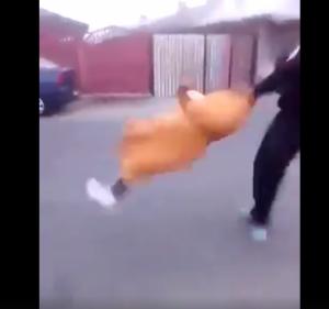 فيديو: شباب يعتدون على امرأة مسنة دون رحمة!