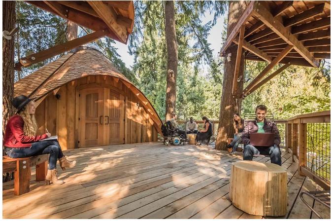 بالفيديو والصور .. مايكروسوفت تبني 3 منازل وسط الأشجار لموظفيها