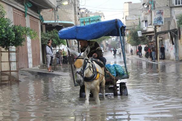 """بالصور : أطرف مواقف """"أمطار غزة""""  ..  ووزير الحكم المحلي يتفقد المناطق المنكوبة بـ""""حمار"""""""