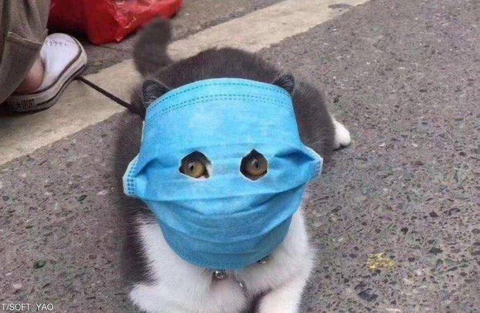 الصين: 15% من القطط في ووهان مصابة بكورونا