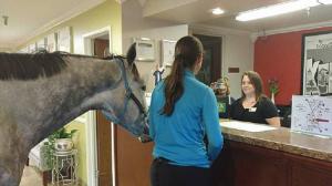 بالفيديو .. سيدة تحجز غرفة فندقية برفقة حصانها! (فيديو)
