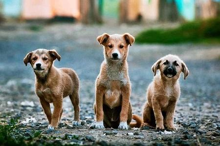 أميركا تحظر استيراد الكلاب من 113 دولة