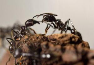 ينجو من الموت ويأكل النمل لـ 6 أيام