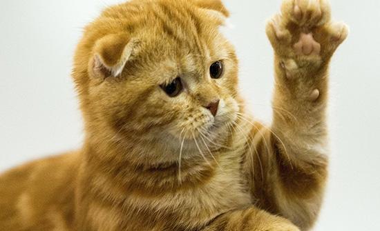 بالفيديو :قطة تقتحم حفلا موسيقيا للاستماع لتصبح بطل الحفل
