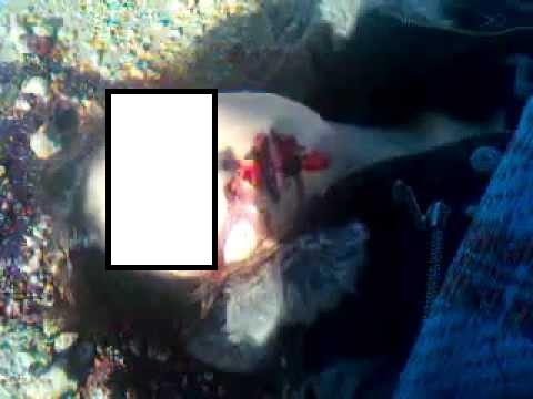 """يوما واحدا على اعتقال """"مغتصبي"""" فتاة الحافلة.. صدمة تهز المغرب بعد اكتشاف جثة قاصر كانت ضحية اغتصاب بمقبرة"""